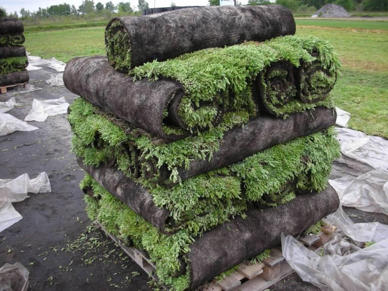 Rul dit eget grønne tag